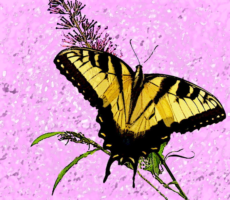 butterfly art by Valerie Vinson